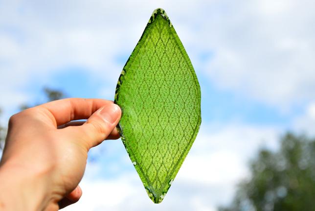 Melchiorri's silk leaf
